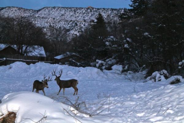 bucks sparring